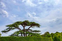 Trees in park near Amboise castle, France. Closeup scenic view of green trees in park of Amboise castle in France Royalty Free Stock Photo