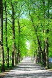 Trees in park near Cathedral place in Vilnius town Stock Image