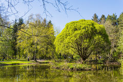 Trees in the park near lake in spring sunny day Stock Photography