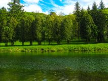 Trees in the park near the river royalty free stock photography