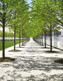Trees in Park, New York City Stock Images