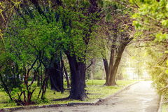 Trees in the park. Old and young trees are green in the spring in the park royalty free stock images