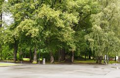 Trees in the park. In Oslo, Norway Stock Image