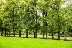 Trees in the park. In Oslo, Norway Royalty Free Stock Photos