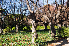 Trees in the park of Pedralbes Royal Palace in winter Royalty Free Stock Photo