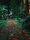 Trees in park in rainy day. Trees in park in rainy day in the morning royalty free stock image