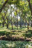 Trees in The Park at Rama IX Park Bangkok, Thailand.  stock photography