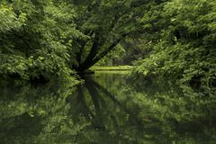 Trees in park reflected in pond stock image