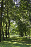 Trees in the Park from Sanssouci in Potsdam,Germany stock image