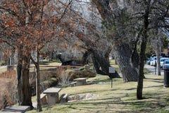 Trees in Park. In Santa Fe near river Royalty Free Stock Photography