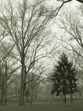 Trees in park in sepia. Trees in central park, nyc in sepia royalty free stock photos