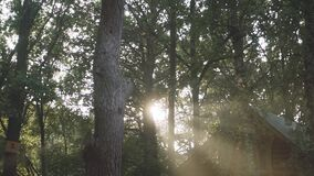 Trees in a park in the setting sun stock video footage