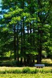 Tall trees Stock Images