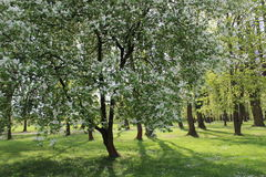 Trees in park. Spring has come stock photo