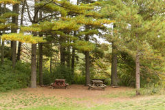 Trees in a Park at the Start of Autumn Stock Photography