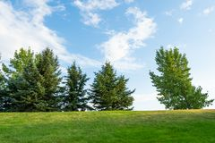 Trees in park during summer on top of a hill. Trees in park during summer on top of hill royalty free stock photography