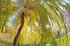 Trees in park Stock Photos
