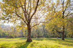 Trees in park Royalty Free Stock Image