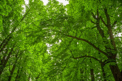 Leafy green trees. In Parco Talon or Chiusa in Italy Stock Photography