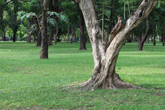 Trees in park. Royalty Free Stock Photos