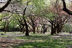 Trees in a Park in Tokyo. A view through the tree in a Tokyo park royalty free stock photography