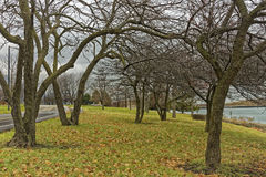 Trees in the park. Beside lake royalty free stock photo