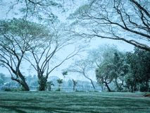 Trees in park. Trees in park in morning royalty free stock photography