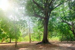 Trees in the park. Thailand royalty free stock images