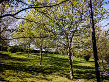 The trees in the park Stock Image