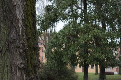 Trees. In a park in Venice, Italy Royalty Free Stock Photos