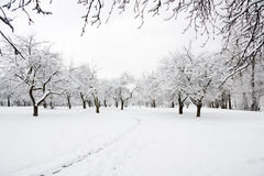 Trees in park in winter day Royalty Free Stock Photos