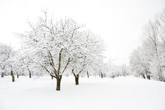 Trees in park in winter day Stock Image
