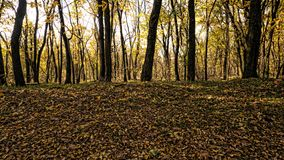 Trees in a park with yellow leaves. Autumn has come royalty free stock photo