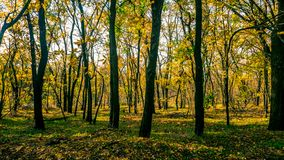 Trees in a park with yellow leaves. Autumn has come royalty free stock images