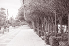 Trees on Paseo de Cristobal Colon in Seville Royalty Free Stock Photo