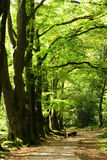 Trees and path Royalty Free Stock Photography