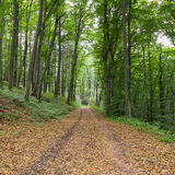 Trees and a Path in a Forest Stock Images