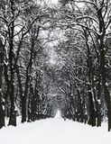 Trees, path and snow Stock Photo
