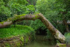 Trees, paths and creeks in a park in Wenzhou in China - 2. Trees, paths and creeks in a park in Wenzhou in China royalty free stock photos