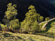 Trees and pathway at Dylife Royalty Free Stock Photography