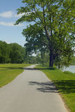 Trees on pathway. Trees on a walking path by the river Royalty Free Stock Images