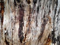 The trees. Patterns wood surface drought Royalty Free Stock Image