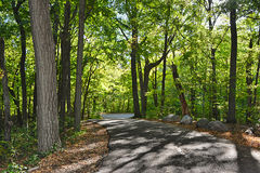 Through the Trees. Paved trail through a forest Stock Image