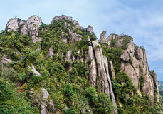 The trees on the peaks Royalty Free Stock Photos