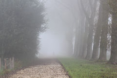 Trees and person on walking path in the mist, fog. Row of trees, person on walking path in the mist, fog, in autumn Stock Images