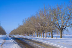 Trees in perspective along a road royalty free stock images
