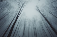 Trees perspective. Trees in mysterious dark forest with fog perspective Stock Photo