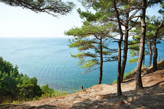Trees pine on rocks over sea Royalty Free Stock Photography