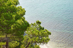 Trees pine on seashore Royalty Free Stock Photos