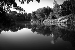 Trees and plant reflect in lake in black and white style Stock Photography